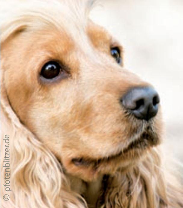 Hund mit Husten