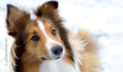 hund-tierarztpraxis-rose