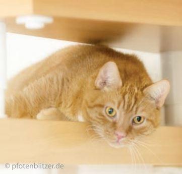 Katze-Polypen-erkennen