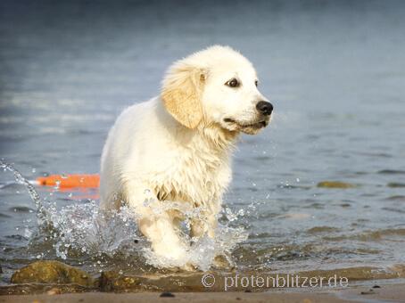 Hund im Wasser 07-03