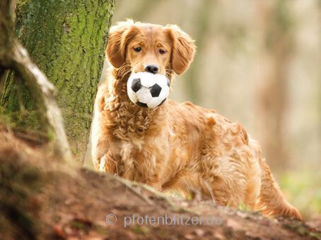 Hund mit Ball in Natur